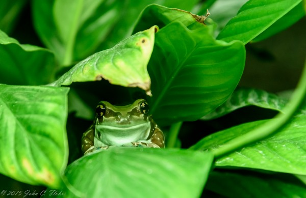 Here's Looking At You - Frog